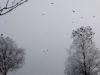 schweden_winter11